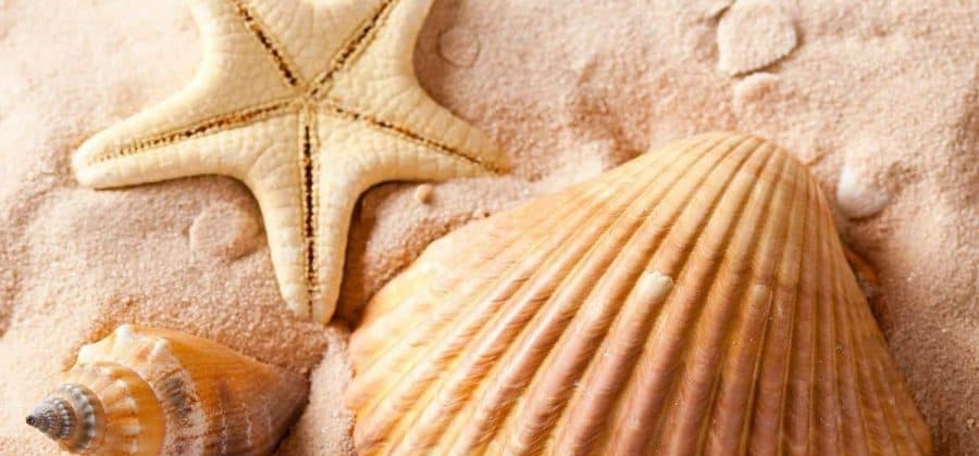 Лучшие варианты поделок из морских ракушек своими руками (100+ фото)