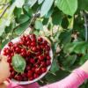 Как выбрать лучшую рассаду в Питомнике?